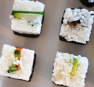 wild-kitchen-rice-cubes-cropped-300px